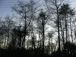 冬のお出かけのオトモたち。_d0028589_22173793.jpg