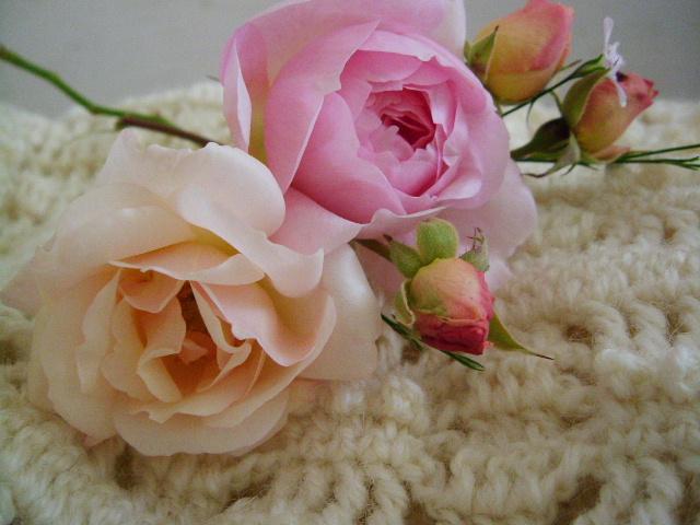 編み物とバラ_f0007106_19222287.jpg
