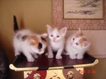 ターキッシュバン子猫4週目_e0033609_13492485.jpg