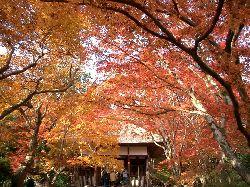 京都の紅葉(その3)。_c0005672_20551952.jpg