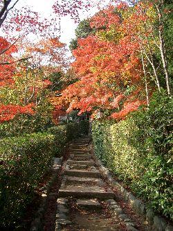 京都の紅葉(その3)。_c0005672_20572444.jpg