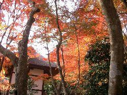 京都の紅葉(その3)。_c0005672_2123063.jpg