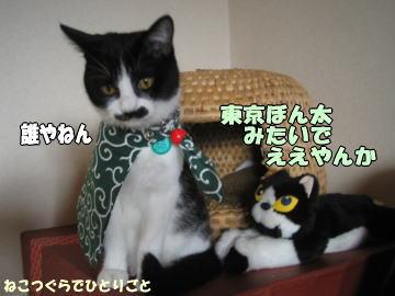 東京ぼん太の画像 p1_17