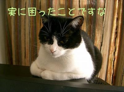 d0005397_1056018.jpg