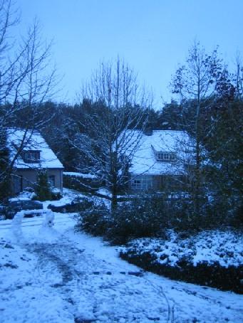 雪 (2005年11月)_c0071305_8264145.jpg
