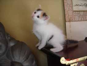 ターキッシュバン子猫4週目_e0033609_22152067.jpg