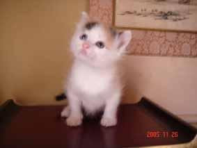 ターキッシュバン子猫4週目_e0033609_22162922.jpg