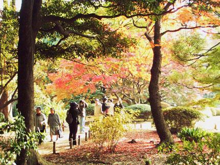 """""""観楓(かんぷう)    \""""Viewing Maple Trees\""""_b0029036_20594259.jpg"""
