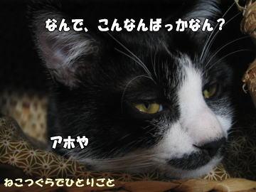 b0041182_140936.jpg