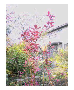 秋・けさの庭から_a0043697_9164393.jpg