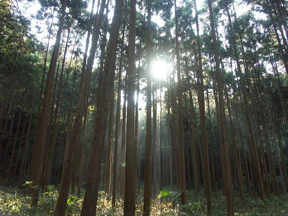鎌倉ハイキング_c0031975_002294.jpg