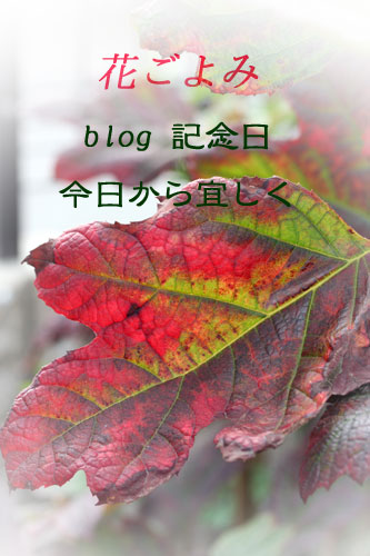 f0005733_12482495.jpg