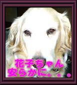 別れ_c0049950_205629100.jpg