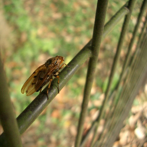 野川公園自然観察園の(略 (5)_e0064461_1372282.jpg