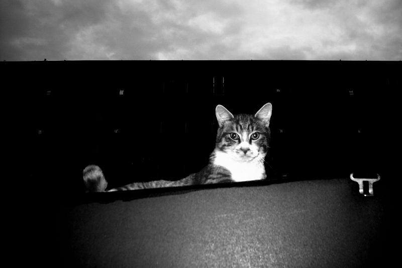 猫写真(GRD)_e0004009_23504411.jpg
