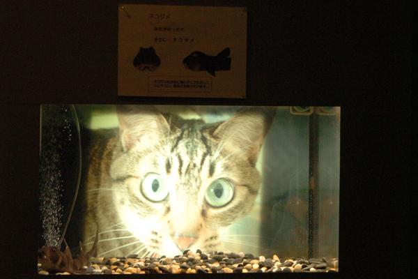 おたる水族館_b0023856_19375485.jpg