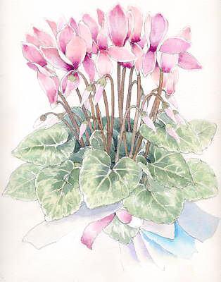 シクラメンの水彩画と描き方 福井良佑の水彩画 Watercolor Terrace