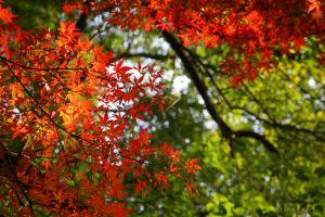 上尾丸山公園_a0027275_212224.jpg