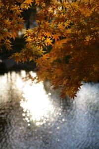 上尾丸山公園_a0027275_2123334.jpg