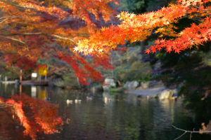 上尾丸山公園_a0027275_2125276.jpg
