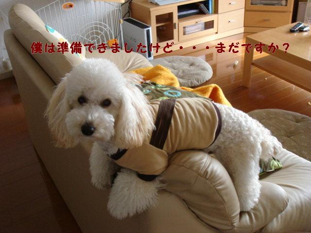 c0065885_2011221.jpg
