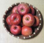 ぶどうの苗木の相談に名取園芸センターに行って来ました。_d0026905_20542740.jpg