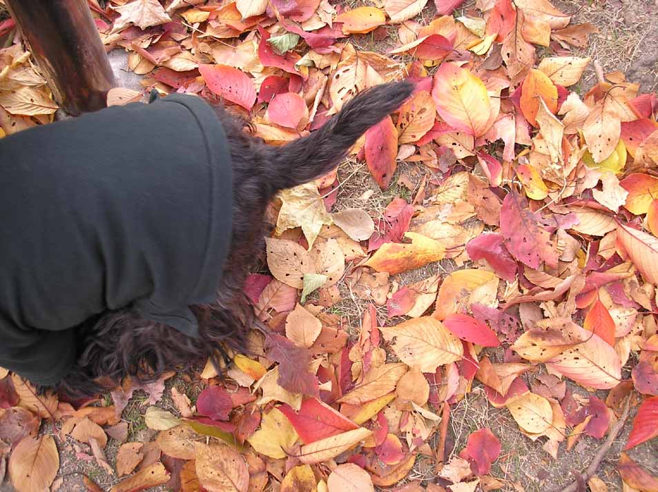 Autumn in 神園公園_e0055098_18335.jpg