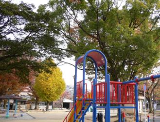公園の木_c0069048_656216.jpg