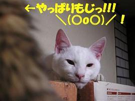 c0000189_162556.jpg