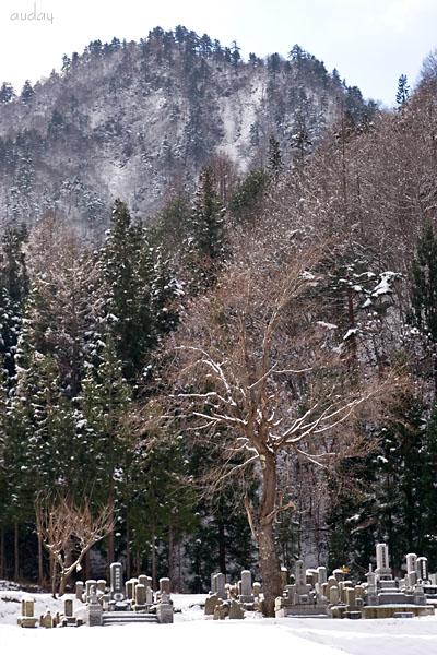 紅葉から半月後・・・ 「墓守の樹」_c0048494_18882.jpg