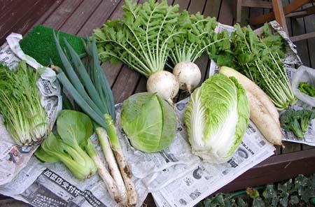 ある日の収穫 その2_b0042538_1747597.jpg