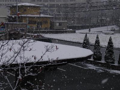 とうとう、雪が積もり始めました。_e0084756_10159100.jpg