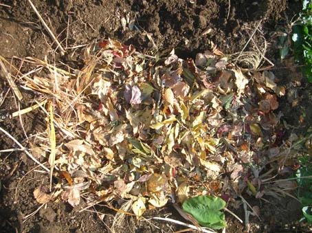 種芋用にアカメ、ヤツガシラ、エビイモ、キョウイモを埋けた_c0014967_18152411.jpg