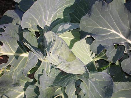 種芋用にアカメ、ヤツガシラ、エビイモ、キョウイモを埋けた_c0014967_181558100.jpg
