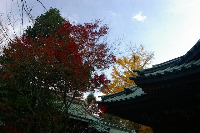 尾崎神社の大イチョウ_d0043136_20285187.jpg