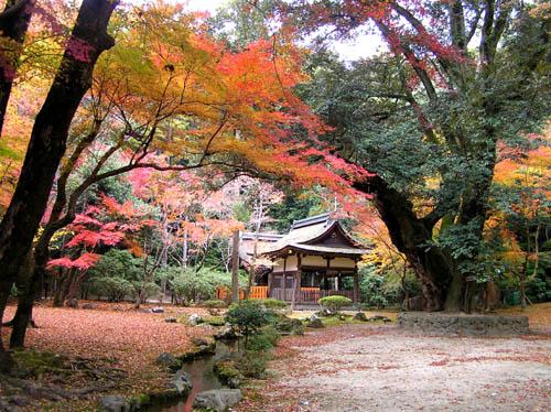 上賀茂神社2_e0048413_23201625.jpg