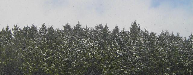 白い風土への慕情・・・雪景色の豊後_c0001578_1205940.jpg