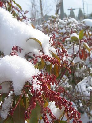 白い風土への慕情・・・雪景色の豊後_c0001578_1504350.jpg