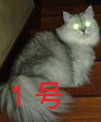 b0066900_15512954.jpg