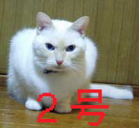 b0066900_1552045.jpg