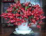 シャコバサボテン、見事に咲きました。_d0026905_13152644.jpg