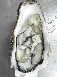 今が旬 牡蠣はうまい_c0053520_2355576.jpg