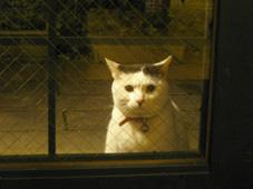猫もお茶をしたい夜_c0052692_1625387.jpg
