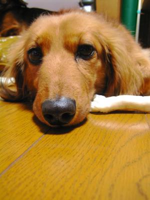 お犬様_d0028499_17201065.jpg