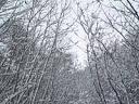 2005年12月9日(金) 雪のち晴れ・5℃_a0024488_1033519.jpg