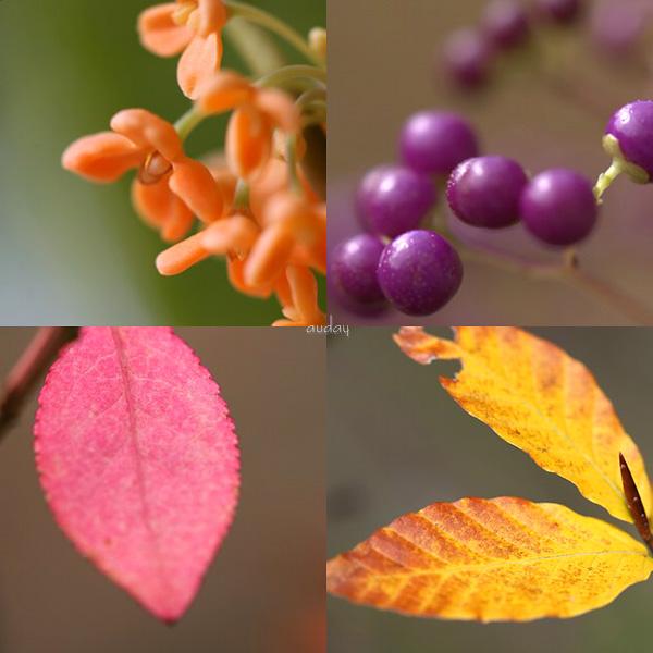 秋を振り返って ・・・ 「マクロの視点」_c0048494_1141086.jpg