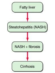 C型肝炎と脂肪肝に関して・・・再評価_a0007242_11294247.jpg