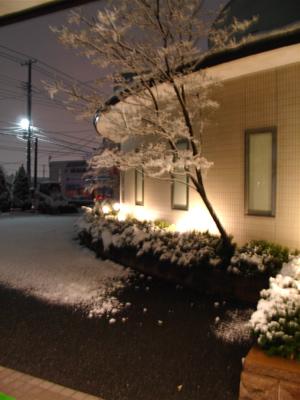 雪が積もり始めました。_e0084756_22302367.jpg