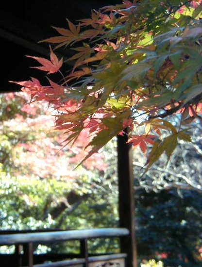 秋の三渓園_d0006718_23445354.jpg