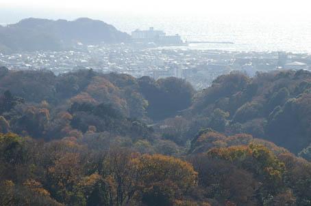 晩秋の名残り(六国見山)と冬の装い(江ノ島ライトアップ)_c0014967_856483.jpg
